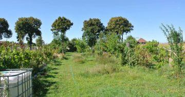 Štepenie ovocných stromov a príprava na jesenný rez @ Ekcentrum ArTUR | Hrubý Šúr | Bratislavský kraj | Slovensko